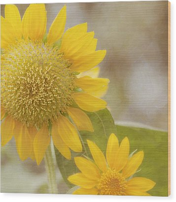 Sunflower Wood Print by Kim Hojnacki