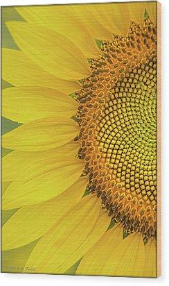 Sunflower Petals Wood Print