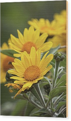 Wood Print featuring the photograph Sunflowers  by Saija Lehtonen