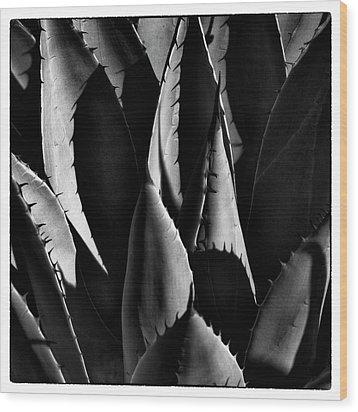 Sunlit Cactus Wood Print by David Patterson