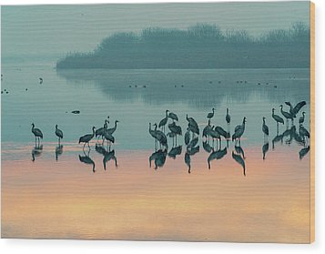 Sunrise Over The Hula Valley Wood Print