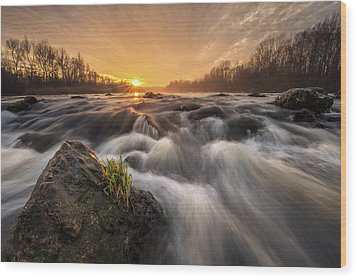 Wood Print featuring the photograph Survivor by Davorin Mance