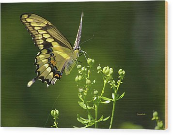 Wood Print featuring the photograph Elegant Swallowtail Butterfly by Christina Rollo