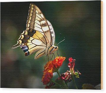 Swallowtail Wood Print by Meir Ezrachi