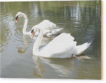 Swan Pair Wood Print by Geralyn Palmer