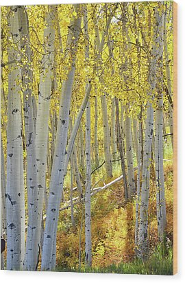 Wood Print featuring the photograph Telluride Aspens by Ray Mathis