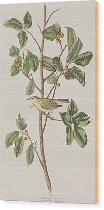 Tennessee Warbler Wood Print by John James Audubon