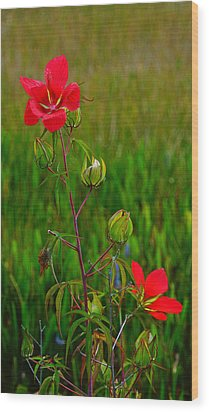Texas Star Hibiscus Wood Print