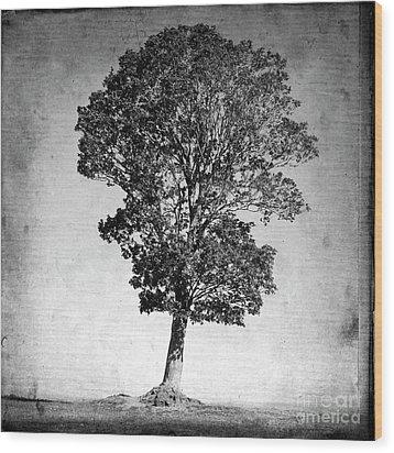Textured Tree Wood Print by Bernard Jaubert