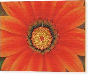 The Beauty Of Orange Wood Print by Lori Tambakis
