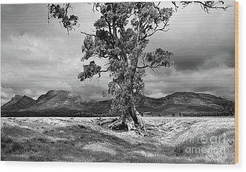 The Cazneaux Tree Wood Print by Bill Robinson