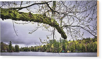 The Pond In Old Forge Wood Print by David Patterson