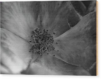The Purple Flower Wood Print by Bransen Devey