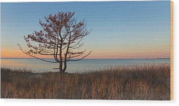 Wood Print featuring the photograph The View by Robin-Lee Vieira