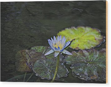 The Water Lily Wood Print by Cendrine Marrouat