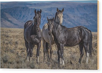 Three Amigo's Wood Print by Joe Hudspeth
