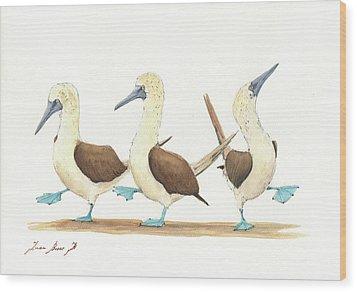 Three Blue Footed Boobies Wood Print by Juan Bosco
