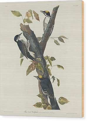 Three-toed Woodpecker Wood Print by Rob Dreyer
