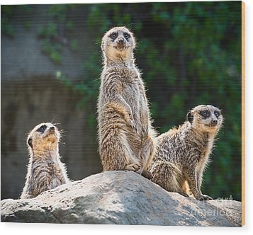 Three's Company Wood Print