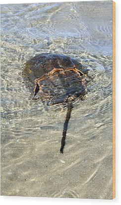 Tidepool Creature Wood Print by Mary Haber