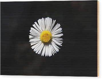 Wood Print featuring the photograph Tidy Fleabane by Charles Ables