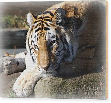 Wood Print featuring the photograph Tiger At Cleveland Zoo by Lila Fisher-Wenzel