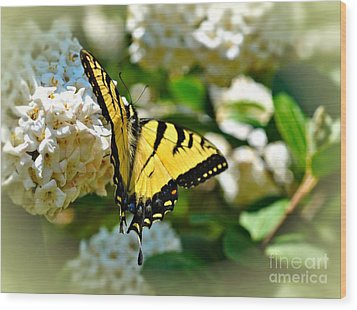 Tiger Swallowtail Wood Print by Elaine Manley