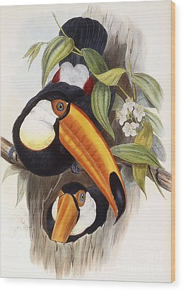 Toucan Wood Print by John Gould