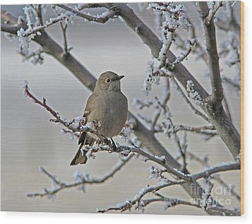 Townsend's Solitaire Wood Print