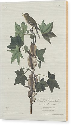 Traill's Flycatcher Wood Print by John James Audubon