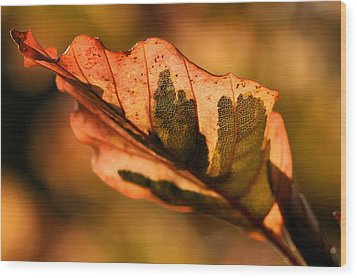 Wood Print featuring the photograph Tri-color Beech In Autumn by Angela Rath