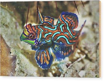 Tropical Fish Mandarinfish Wood Print by MotHaiBaPhoto Prints