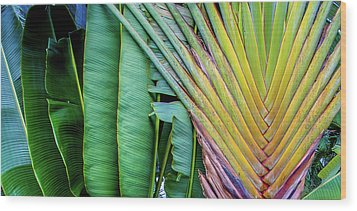 Tropical Palms Wood Print