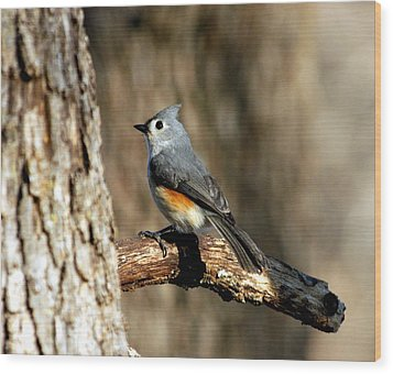 Tufted Titmouse On Branch Wood Print by Sheila Brown