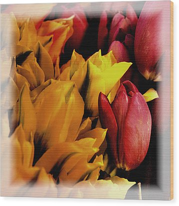 Tulips  Wood Print by David Patterson