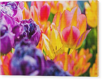 Wood Print featuring the photograph Tulips Enchanting 39 by Alexander Senin