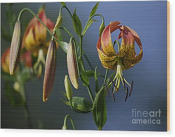 Turk's Cap Lily Wood Print by Randy Bodkins