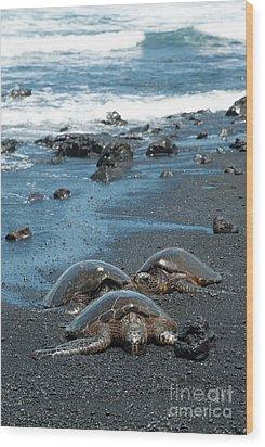 Turtles On Black Sand Beach Wood Print