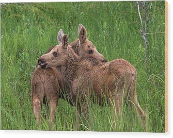 Twin Baby Moose Wood Print