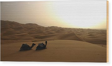 Two Camels At Sunset In The Desert Wood Print by Ralph A  Ledergerber-Photography