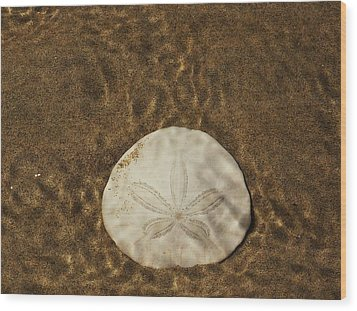 Underwater Sand Dollar Wood Print