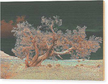 Wood Print featuring the photograph Unusual Tree - Digital Painting by Merton Allen