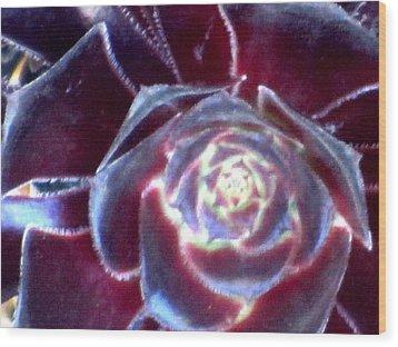 Velvet Rosette Wood Print