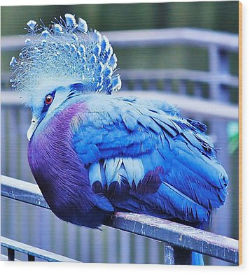 Wood Print featuring the photograph Victoria Crowned Pigeon by Al Fritz