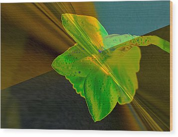 Wood Print featuring the photograph View Of A Daffodil by Jeff Swan