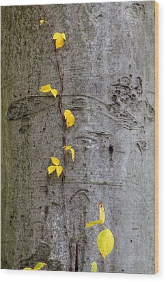 Vine Climber Wood Print by Deborah  Crew-Johnson