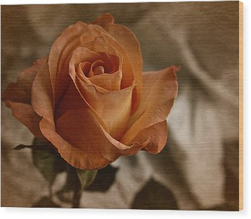 Wood Print featuring the photograph Vintage Orange Rose by Richard Cummings