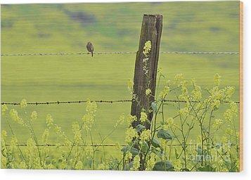 Warbler In The Meadow Wood Print