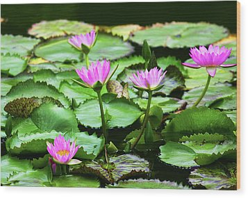 Wood Print featuring the photograph Water Lilies by Anthony Jones