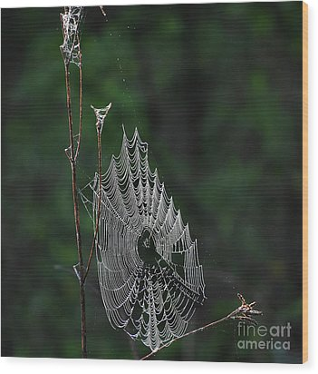 Wood Print featuring the photograph Webs We Weave by Skip Willits